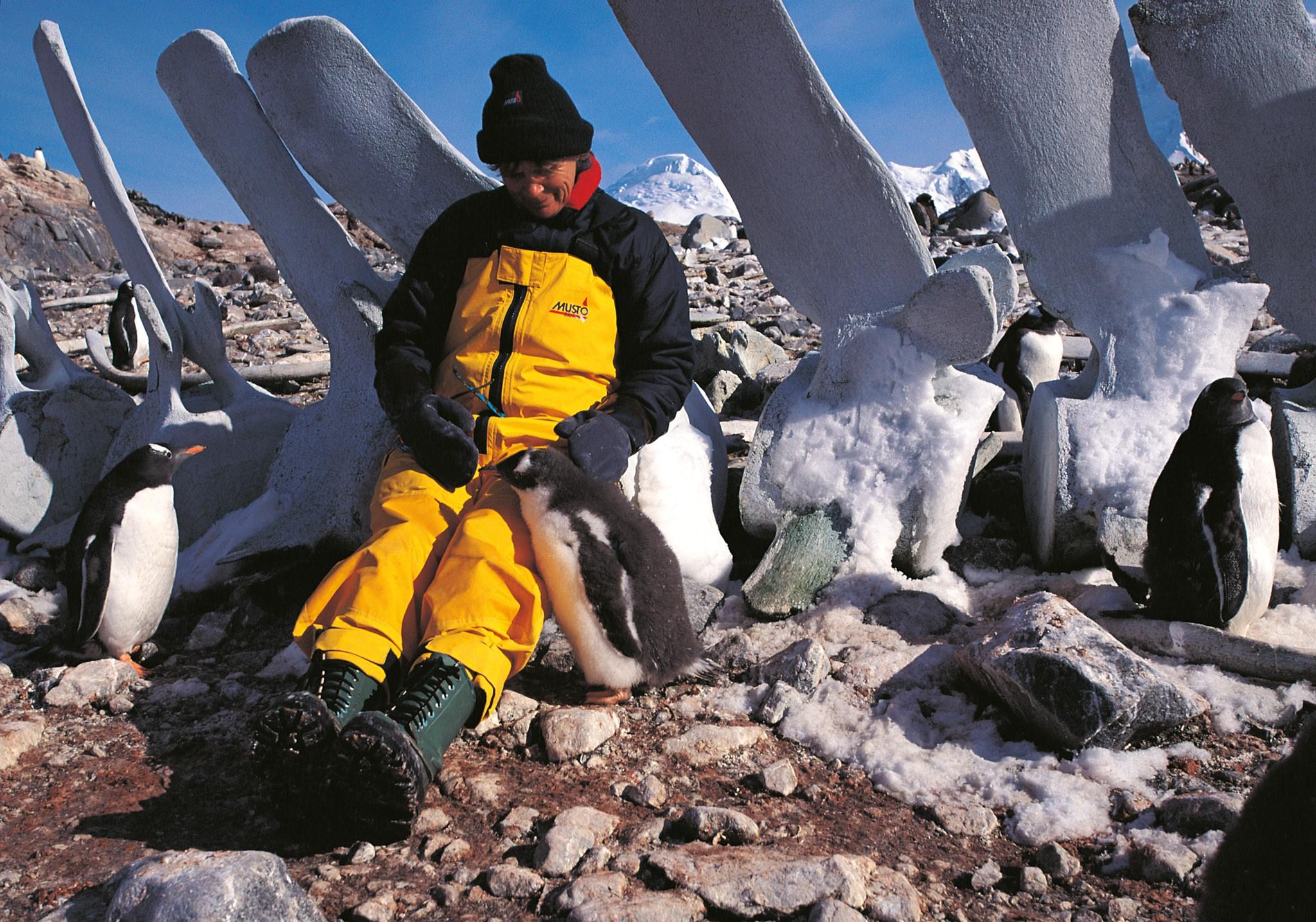 Walskelett Heide mit Pinguin