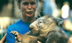 Der Wombat ist ein Schwergewicht