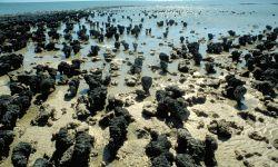 Stromboliten in der Shark Bay: Die ältesten Lebensformen der Erde